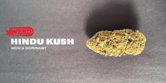 Hindu Kush Strain - best weed delivery near me in Calgary_